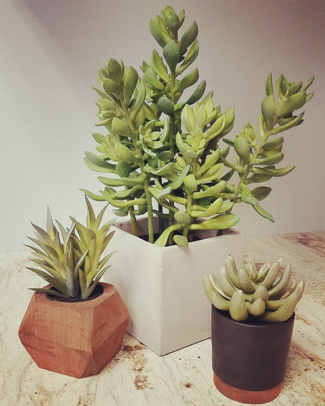 artificial succulent in cement pot medium threshold target. Black Bedroom Furniture Sets. Home Design Ideas