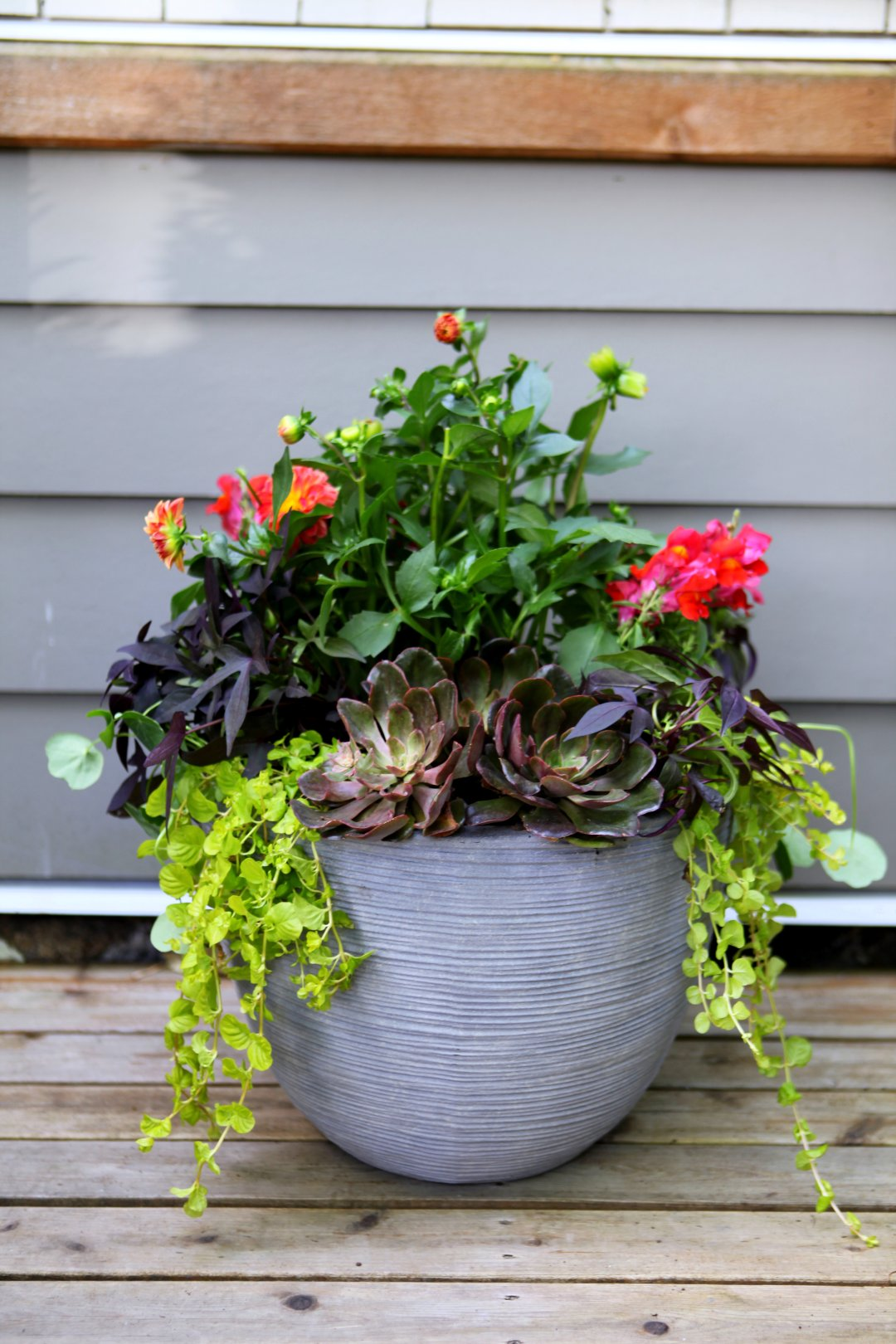 basics container gardening garden love copy of