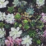 instagram profile for portlandbungalow. opens in a new tab