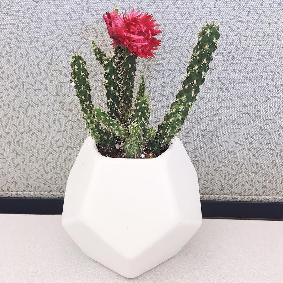 Hand Made Modern Ceramic Planter Large Target