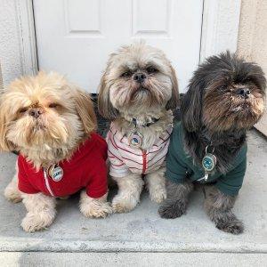 Pets Campaign   American Apparel