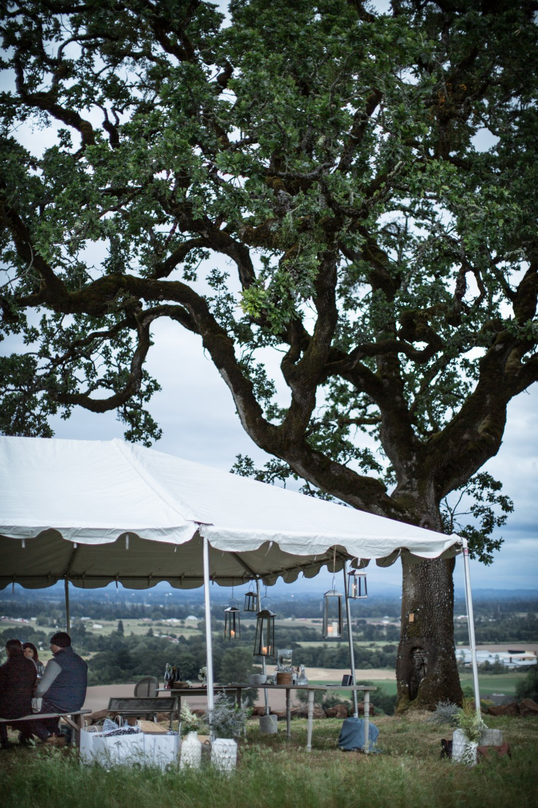 Large Oak tree next to tent