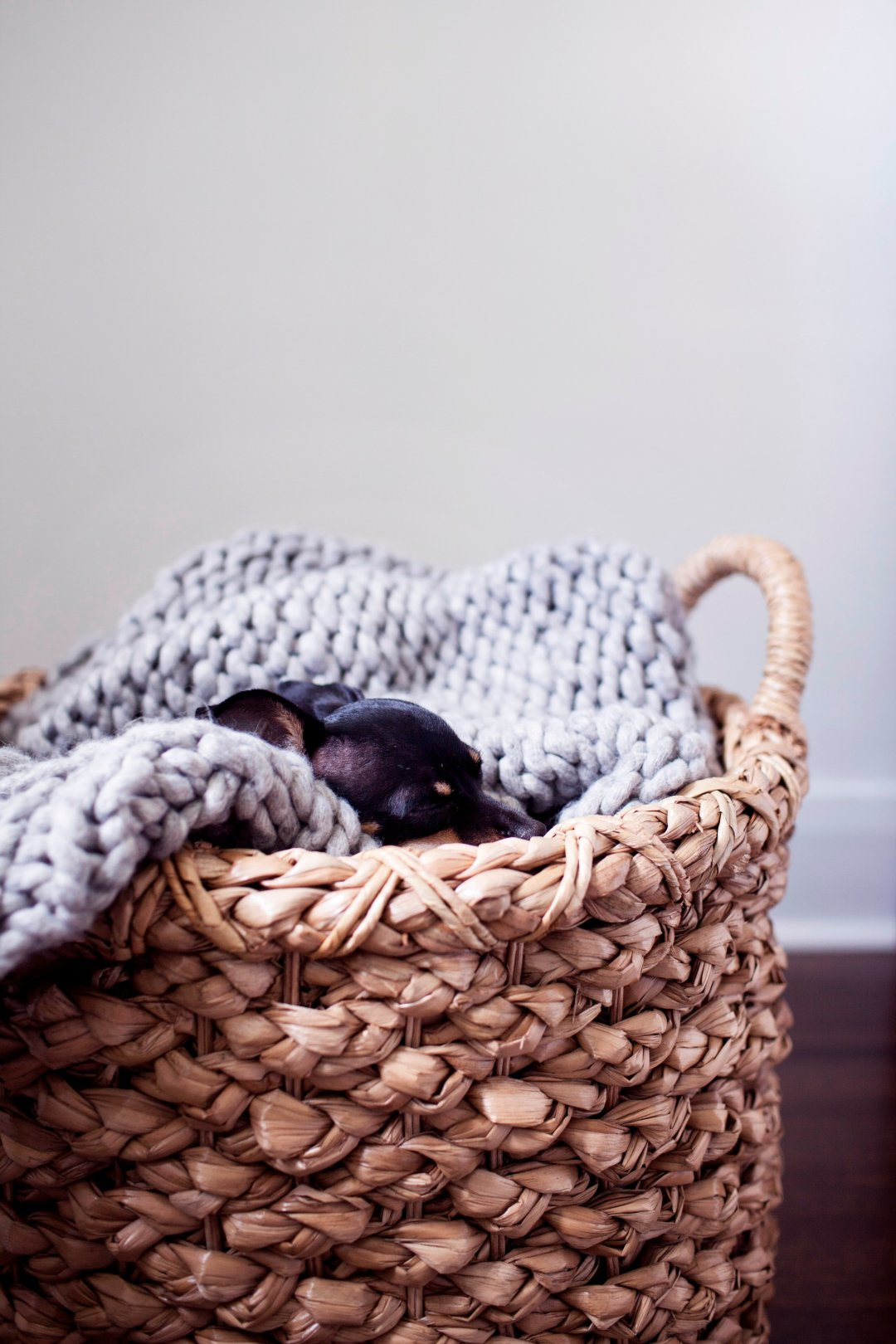 Dog in basket with blanket