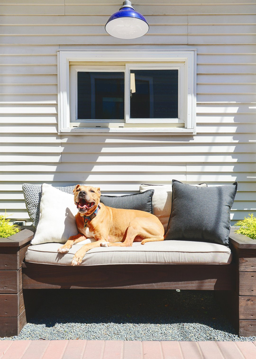 Brown dog laying on outdoor bench with pillows